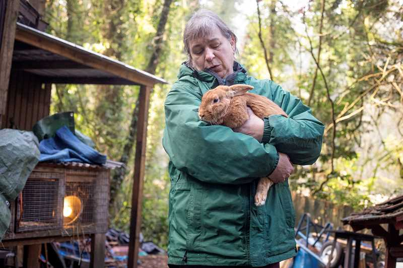 PMG PHOTO: JONATHAN HOUSE - Toby Cantine holds Alexander the Great, a rescue bunny that she has adopted on her farm.