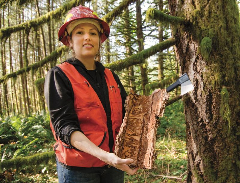 COURTESY PHOTO: OREGON DEPARTMENT OF FORESTRY - Forest entomologist Christine Buhl will talk about the importance of bees to Oregon's forests and bee conservation in a presentation at the Tillamook Forest Center on Saturday morning, March 9.