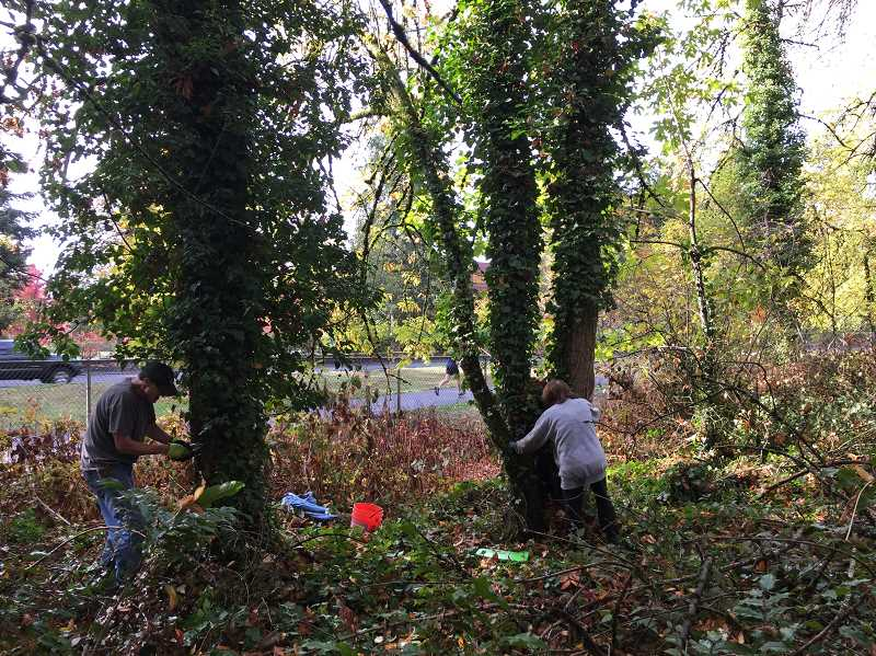 SUBMITTED PHOTO: OSWEGO LAKE WATERSHED COUNCIL - The Westlake Homeowners Association holds work parties on the third Saturday of each month to restore the habitat and remove invasive species. The next one is scheduled for March 16.