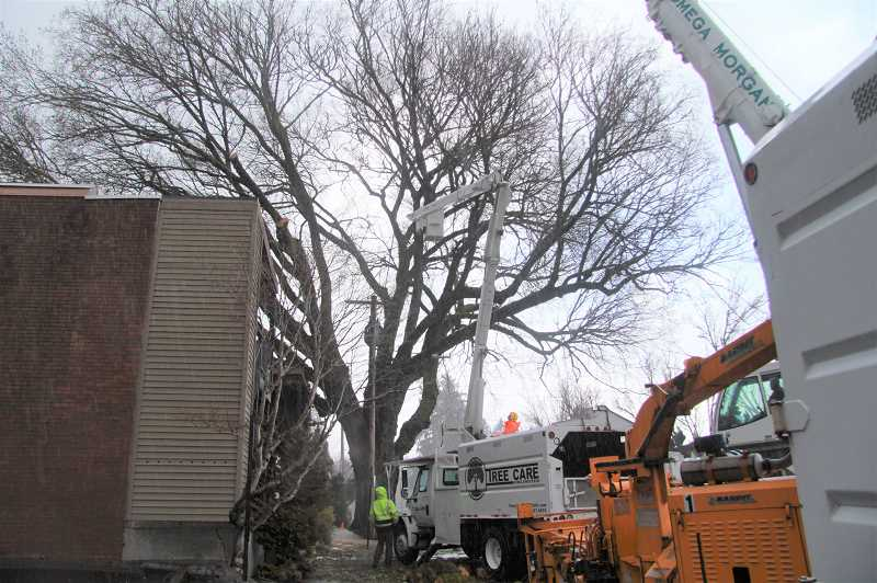 REVIEW PHOTO: SAM STITES - Crews work to remove a 140-year-old American Elm after the Heritage Tree's trunk split and its branches came to rest on a downtown building.