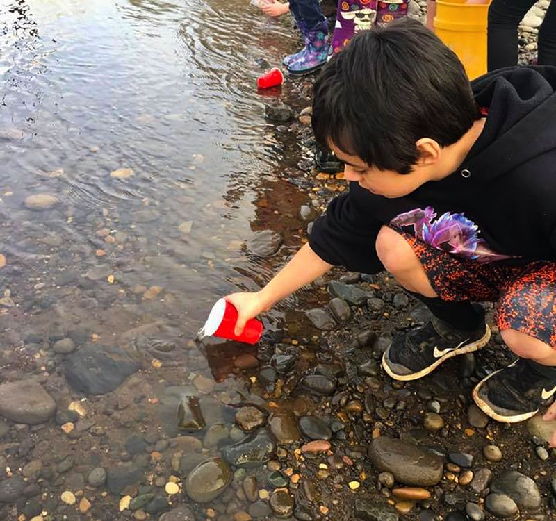 SUBMITTED PHOTO - Noah Baker joins fourth-grade classmates from Gaffney Lane Elementary to release newly hatched salmon fry into the Clackamas River. The three-month unit teaches children about salmon growth and development and habitat needs.