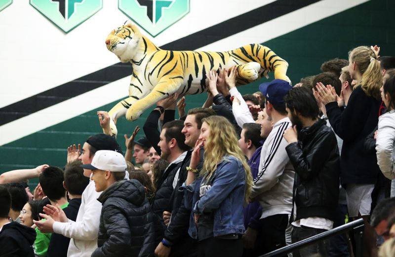 PMG PHOTO: DAN BROOD - The large group of Tigard students at Saturday's state playoff game pass around a Tiger during the home team's win over Barlow.