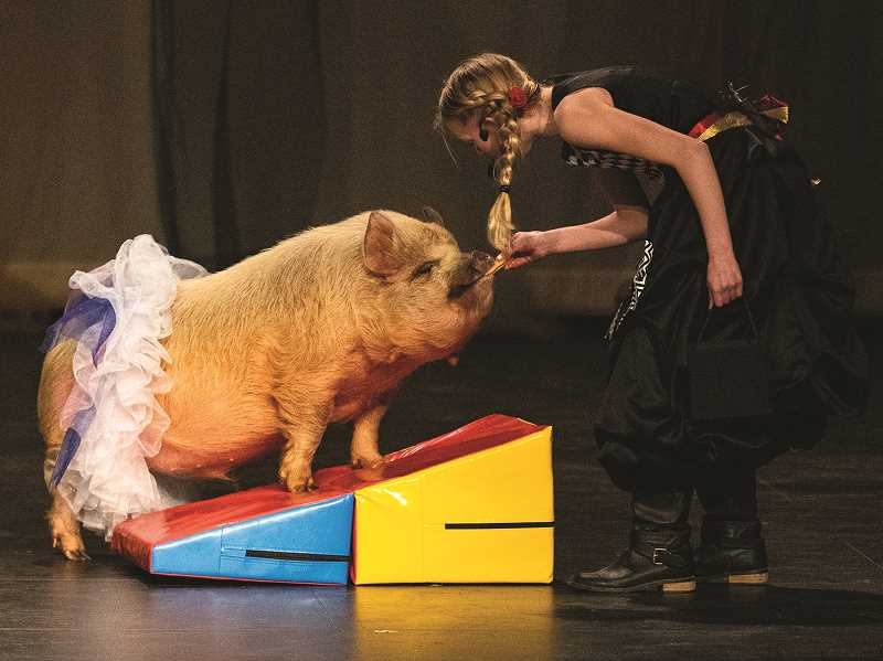 LON AUSTIN/CENTRAL OREGONIAN - Mattie Gaynor and The Amazing Odie show their tricks. The pig seemed to be more interested in Butterfinger treats than in performing.