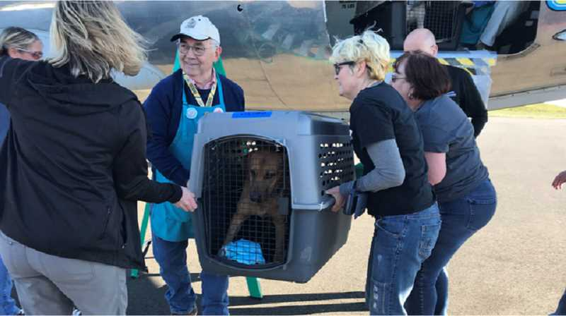 COURTESY KOIN - Dogs from Alabama are offloaded at the Hillsboro Airport. The dogs are being sent to the Oregon Humane Society, which will find new homes for them.