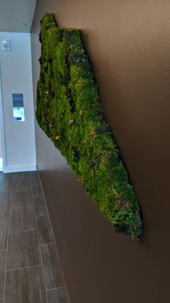 PAMPLIN MEDIA GROUP: JOSEPH GALLIVAN - Decorative live moss outside the elevators at the Carson North apartments at Northwest 21st and Savier.