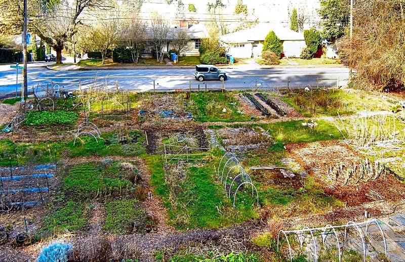 ELIZABETH USSHER GROFF - The Cesar Chavez Community Garden in Woodstock will remain a garden, after overcoming several obstacles during the winter. Gardeners there say they love the social, educational, and economic benefits of the large space - generously provided by a neighbor.