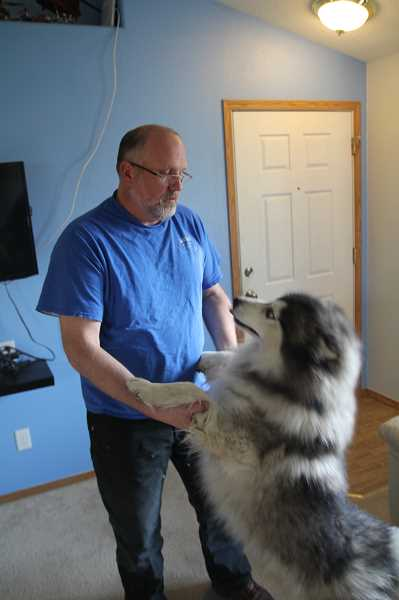 PNG PHOTO: JUSTIN MUCH - Gage still gets excited when Jason Cobb comes home from work. The malamute-husky mix ventured from his Woodburn home in early December and ended up spending the winter in an Olympia, Wash., homeless camp.