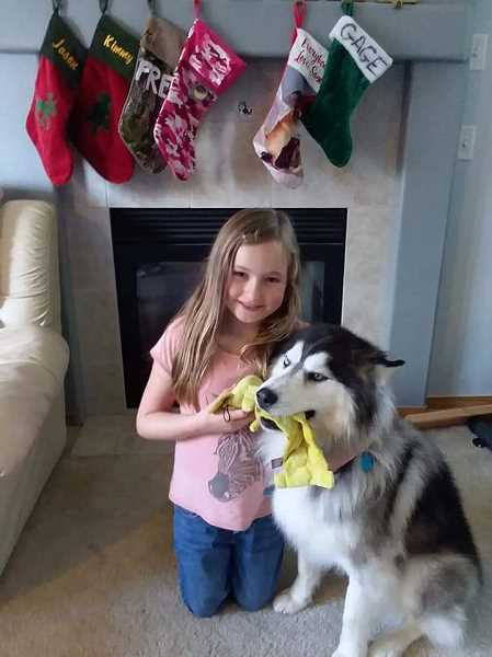 COURTESY OF KIM COBB - Karlie Cobb, 8 1/2, of Woodburn, prayed every night that her friend, Gage, would be safe and someday return. The Cobb familys malamute-husky mix ventured from home in early December and spent the winter in an Olympia, Wash., homeless camp before returning home March 14.