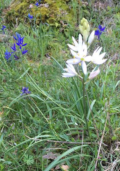 COURTESY PHOTO: PATTI MCCOY - Camassia Nature Preserve is home to a wide variety of native plants and animals.