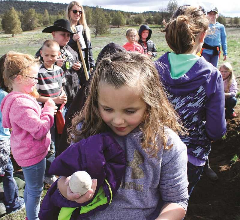 HOLLY SCHOLZ/CENTRAL OREGONIAN   - Ellie Rayevich admires her prehistoric find.