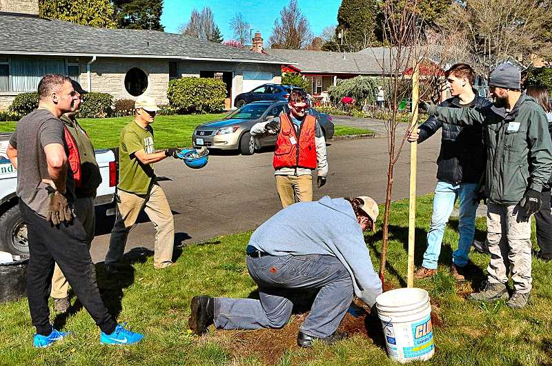 DAVID F. ASHTON - In the Reed neighborhood, volunteers were putting the finishing touches on a tree theyd just planted.