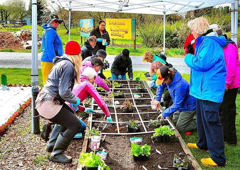 DAVID F. ASHTON - Learning by doing, these folks are Planting a Square Foot Garden in the Multnomah County Master Gardeners Demonstration Garden.