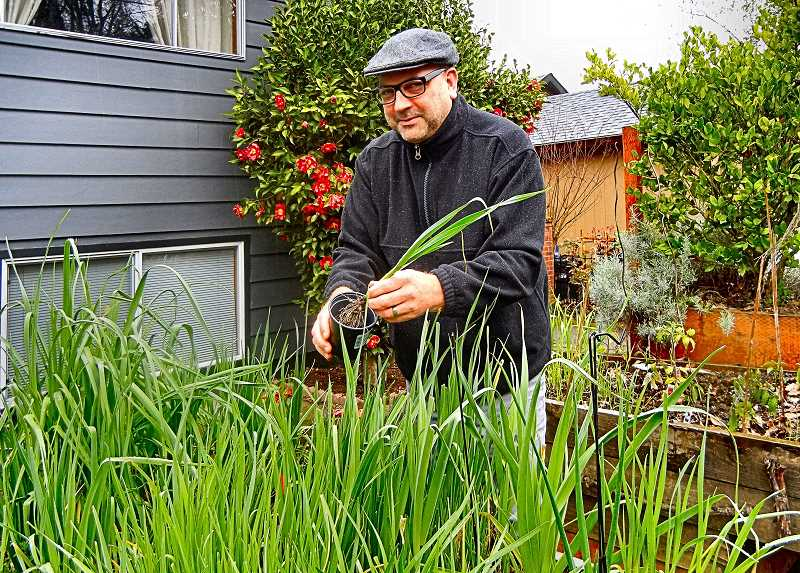 ELIZABETH USSHER GROFF - Christopher Bacher, Woodstock resident and Southeast Uplift representative to the Woodstock Neighborhood Association, plans to divide a bed full of shallots to contribute to the WNA Plant Sale on May 11th.