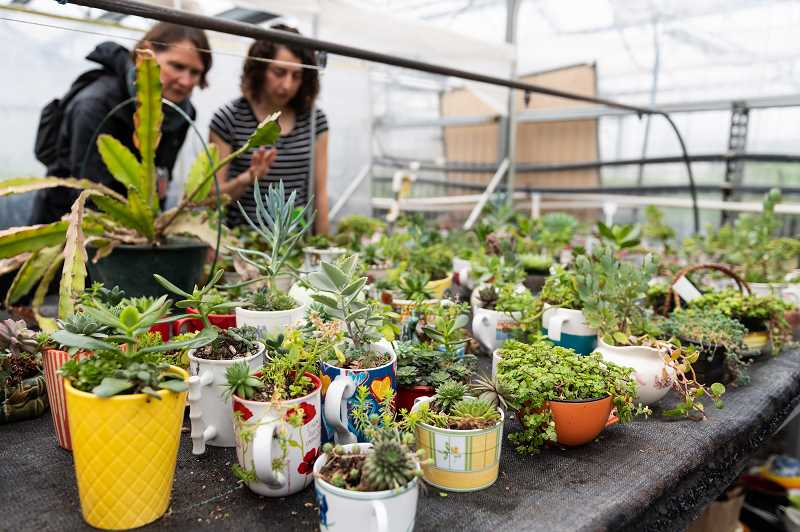 PMG PHOTO: CHRISTOPHER OERTELL -  The Washington County Master Gardeners Association Annual Plant Sale, Gardenfest, is held on Saturday April 27, from 8 a.m. to 2 p.m., at PCC Rock Creek Campus.