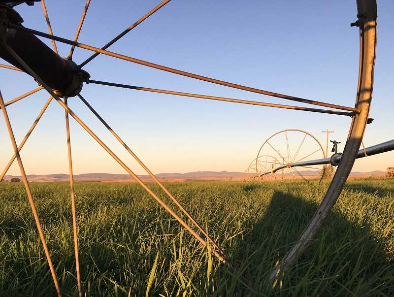 DESIREE BERGSTROM/MADRAS PIONEER - North Unit Irrigation District water will be available to irrigators April 30. To order water, producers can call their ditch riders on April 29.