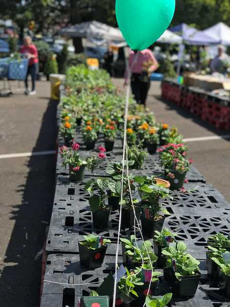 PMG PHOTO: LESLIE PUGMIRE HOLE - Rite Aid Distribution Center in Wilsonville held its 13th annual plant sale Aprl 27 to benefit the Childrens Miracle Network Hospitals and Doernbecher Childrens Hospital.