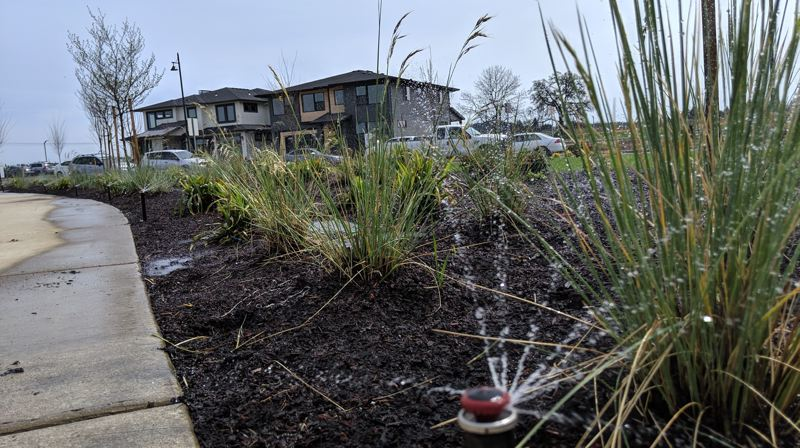 PAMPLIN MEDIA GROUP: JAIME VALDEZ - Landscaping going in at Reed's Crossing on Chinkapin, the main road in front of the welcome center.
