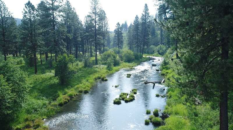 SUBMITTED PHOTO - The tribes have acquired nearly 3.5 miles of frontage on the Middle Fork John Day River.