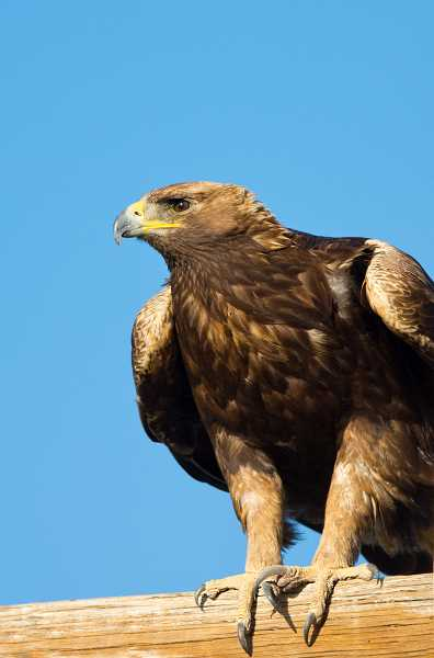 COURTESY PHOTO  - Raptors, or birds of prey, is the topic of the Learning and Technology session May 20. Presenter is Marilyn Ellis, a certified interpretive guide. Art Henderson arranges for interesting speakers each week for the program. All are invited to attend; the program begins at 9:30 a.m. at the center.
