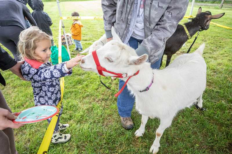 PMG PHOTO: JONATHAN HOUSE - Emilie Throop feeds and pets the goat Lolo at Luscher Farm.