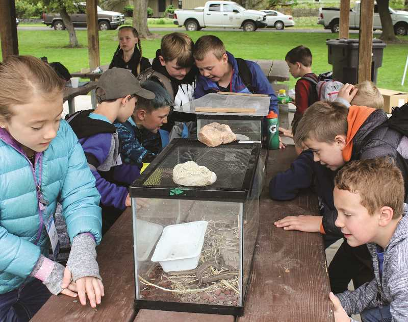 JASON CHANEY/CENTRAL OREGONIAN  - Powell Butte Community Charter School third graders check out snakes, frogs and more at the Amphibians/Herpetology station.