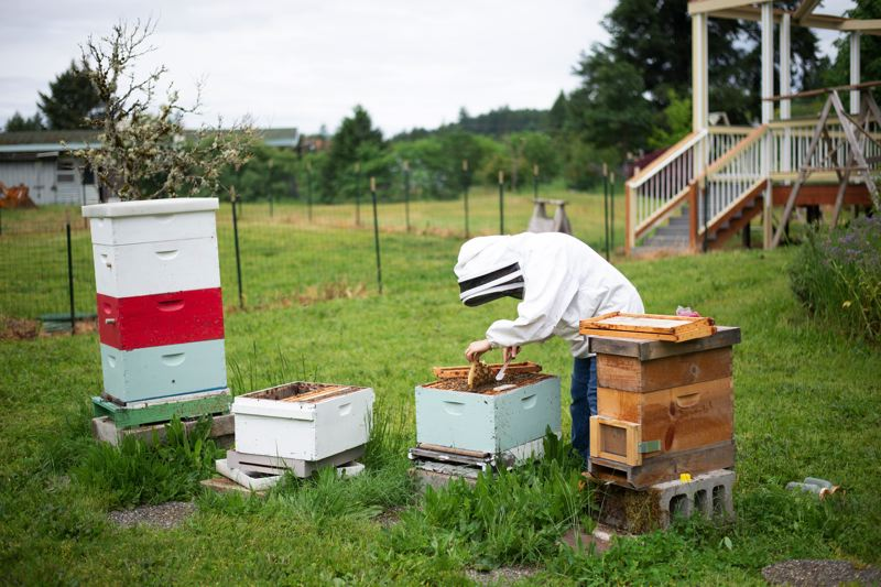 PMG PHOTO: ANNA DEL SAVIO - Linda Zahl wears a protective layer to look over her bees, but other times she checks on the bees without protection. More important, Zahl says, is moving slowly and being aware of the signs when the bees are angry.