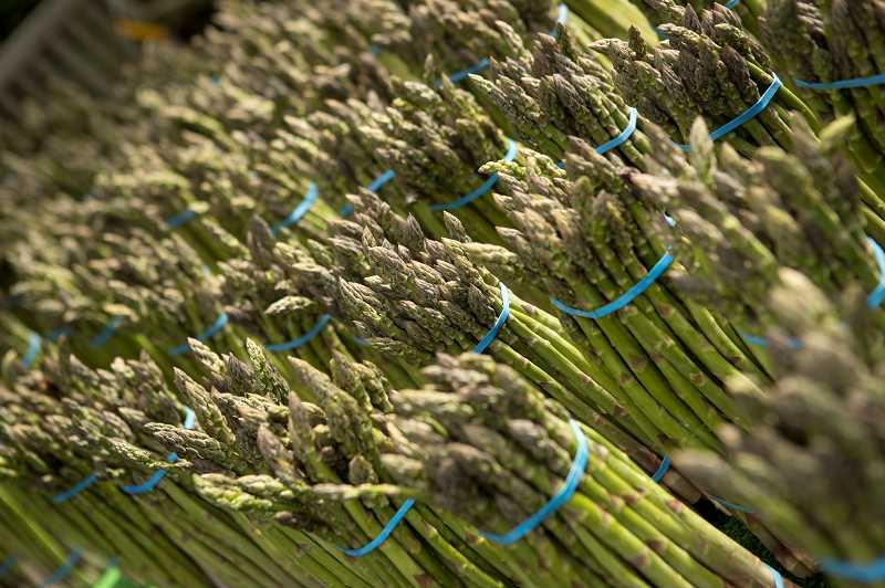 PMG PHOTO: JAIME VALDEZ - Rows of asparagus from Crawford's Nursery and Produce in Cornelius were featured on the opening day of the Lake Oswego Farmers' Market at Millennium Plaza Park.