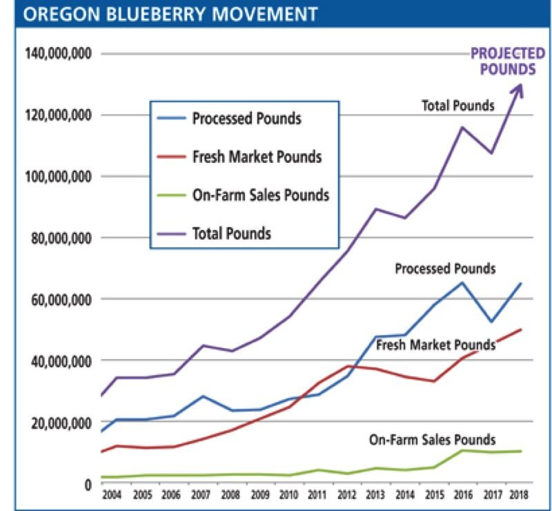 SOURCE: OREGON DEPARTMENT OF AGRICULTURE - Blueberry production has quadrupled since 2004 in Oregon.