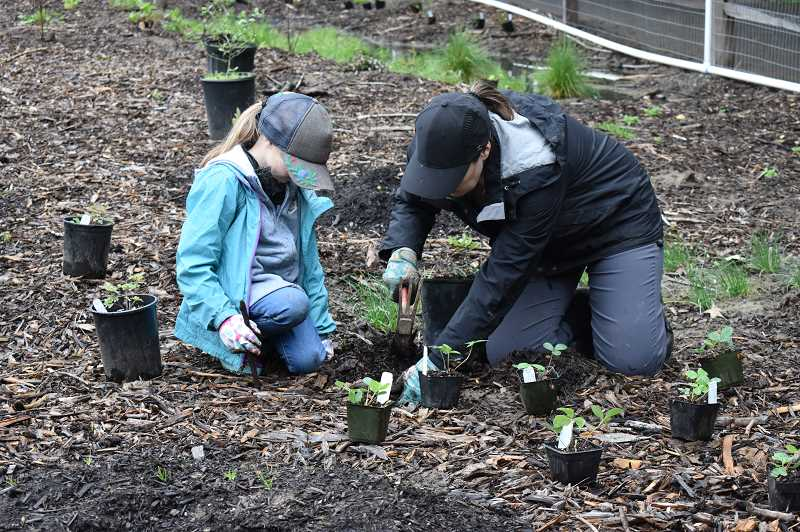 COURTESY PHOTO  - West Linn Parks and Recreation invites all to participate in the first Pollinator Week events, taking place at Mary S. Young Park June 17 through 23.