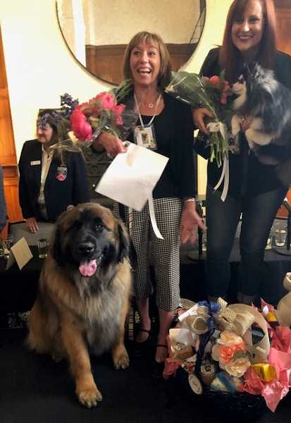 COURTESY PHOTO:  - Otto the Leonberger won King of the Rose Festival Canine Court Wednesday, May 22. Fancy, a pomeraninan mix was named queen.