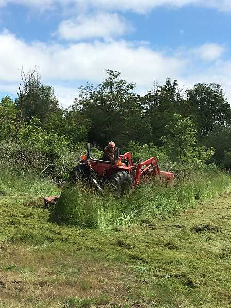 COURTESY OF SCOTT JORGENSEN - Aurora City Councilor Brian Asher mows down tall grass on a city-owned site at the east end of Ottaway Road that could potentially serve as a dog park.