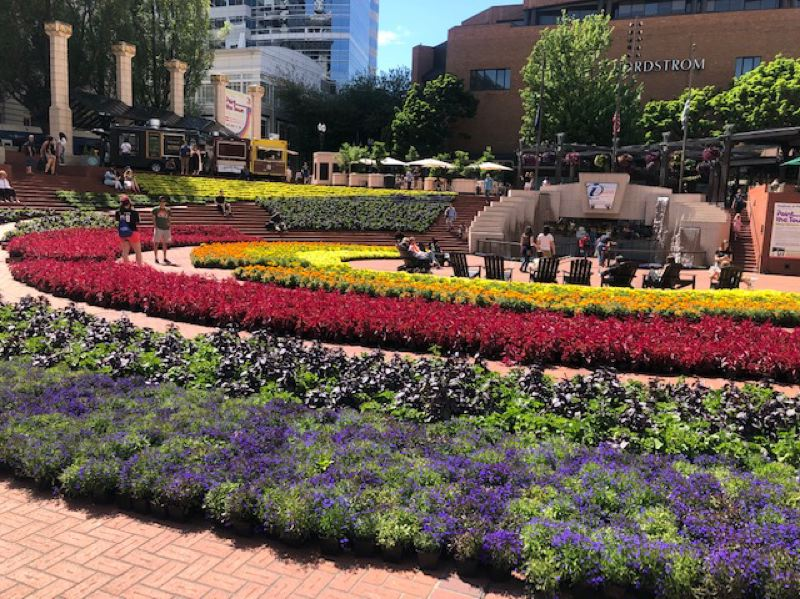 PMG PHOTO: MARK GARBER - Just some of the floral displays at the annual Festival of Flowers at Pioneer Courthouse Square.