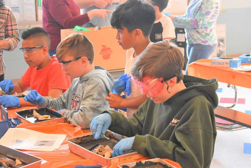 PMG PHOTO: EMILY LINDSTRAND - Students dissect frogs during Estacada Middle Schools science night on Thursday, May 30.