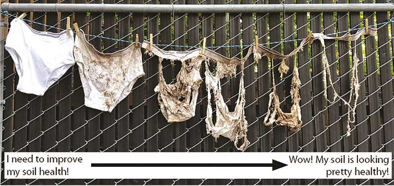 COURTESY PHOTO: CSWCD - How soiled are your underwear? The clean, cotton underwear you buried, that is. After burying underwear for two months, underwear reveal the health of the soil.