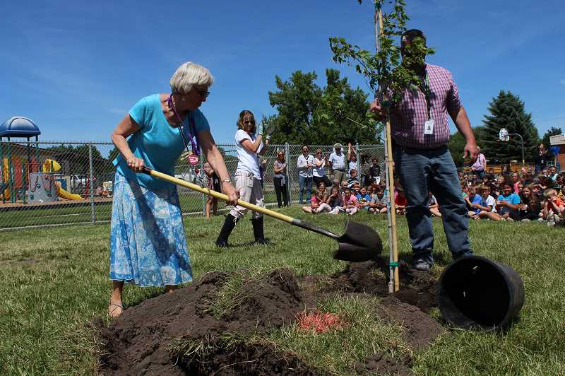 HOLLY SCHOLZ - Crooked River Elementary special education educational assistant Phyllis Burge, left, helps plant a sienna maple tree in the schools west playground as CRE Assistant Principal Adam Stefanek holds up the tree.