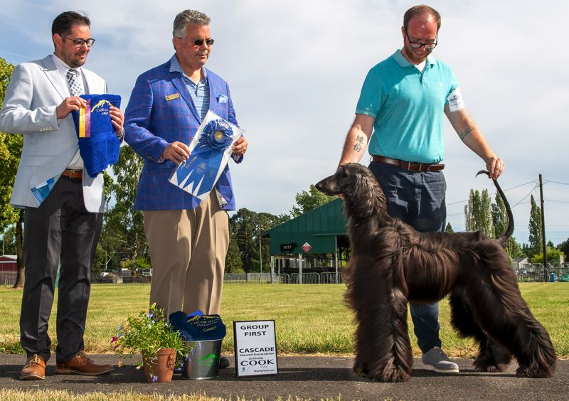 COURTESY PHOTO - Max, an Afghan Hound from Oregon City, and his handler Daniel Magee of Chehalis, Washington, impress the judges on June 16.