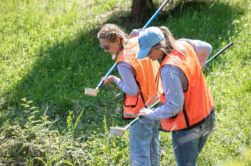 PHOTO: CLACKAMAS COUNTY VECTOR CONTROL - Two Technicians analyze mosquito larvae findings in their dipper cups.
