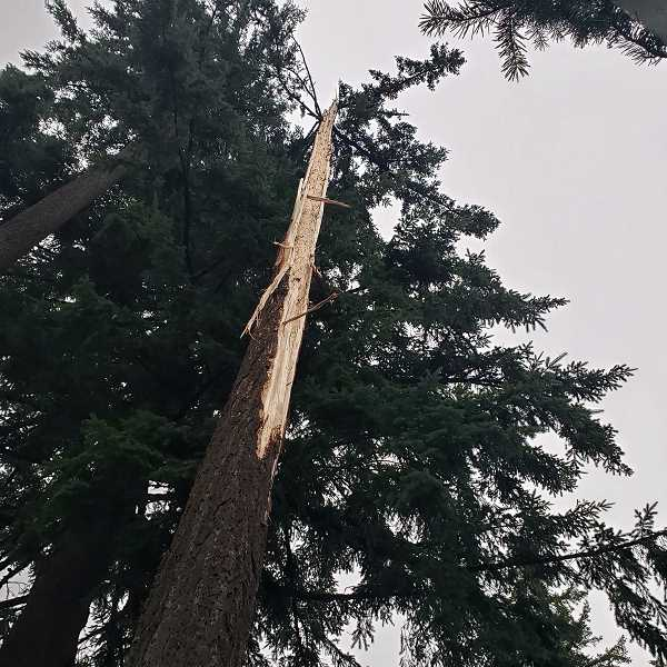 COURTESY PHOTO - Lightning struck a tree near next to the family's home Wednesday, June 26.