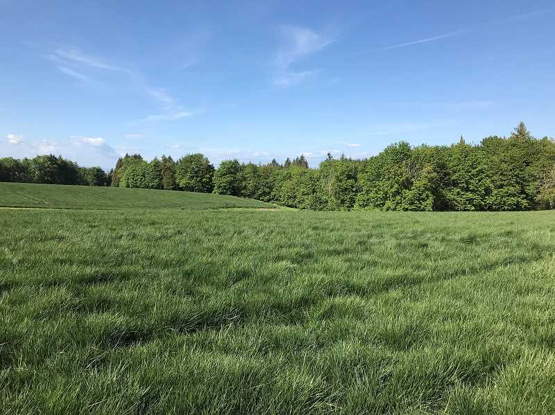 COURTESY PHOTO: EAST MULTNOMAH SOIL AND WATER - This 57-acre parcel of land near Oxbow Park was bought and protected from development. It is now a part of Sester Farms.
