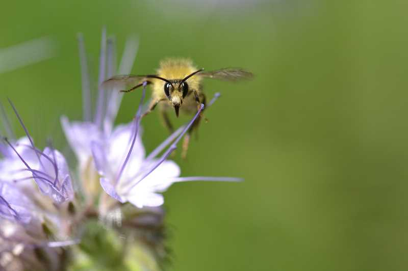 COURTESY PHOTO - From now through September, youth in kindergarten through fifth grade can participate in a pollinator scavenger hunt.