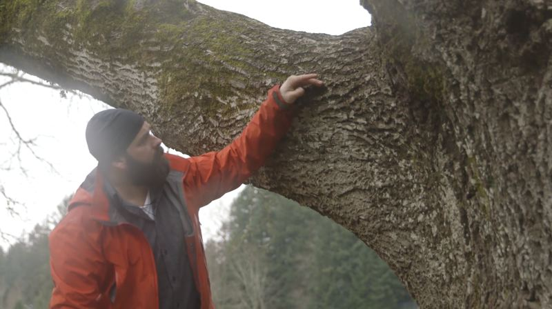 COURTESY PHOTO - Sam Gaty's 'Tree Death' is part of the 'Canopy Stories' lineup.