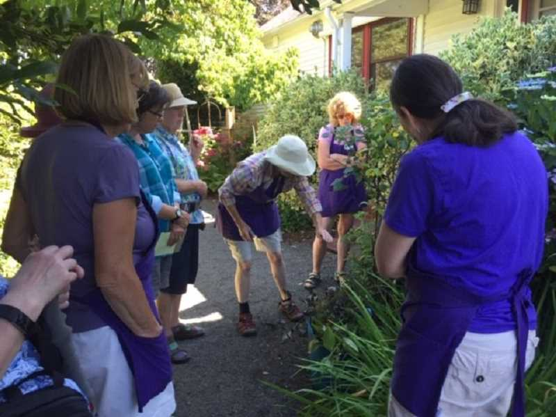 COURTESY PHOTO - The Friends of the Rogerson Clematis Collection will host a workshop focused on extending the bloom season of perennials, including clematis, with easy pruning from 10 a.m. to noon Saturday, July 13, in the greenhouse at the Rogerson Clematis Garden at Luscher Farm, 125 Rosemont Road, West Linn. All materials will be provided, but attendees should bring clippers if they have them. Class fee is $10 for FRCC members, $25 for nonmembers, and free for FRCC members at the patron and Duchess of Waverly levels. Register and learn more at rogersonclematiscollection.org/events.