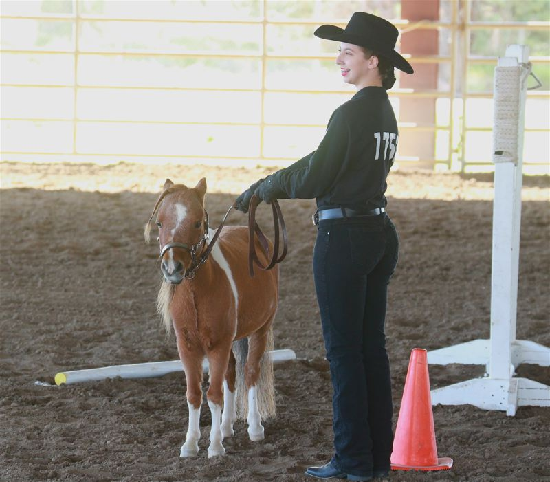 COURTESY PHOTO: ANGIE WACKER - Oregon City's Eva Howard and minature horse Stetson led the field in the In Hand Trail event at the Pacific Northwest Invitational Championship meet at the Deschutes Country Expo in Redmond.
