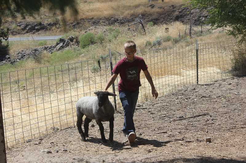 DESIREE BERGSTROM/ MADRAS PIONEER - Jaden Scott came into 4-H wanting to try something new, learn and have some fun, as many of his friends were already doing. With many hours dedicated to his lamb, Katrina, he is heading into fair with new skills, a few questions and an animal with quite the personality.