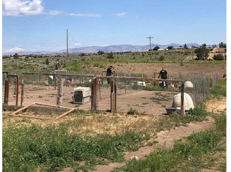 SUBMITTED PHOTO - Deputies from the Jefferson County Sheriff's Office check out the kennel area on a breeder's property, where 57 Aussies were seized.