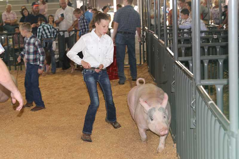 PMG PHOTO: JUSTIN MUCH - Schuster, along with representatives from northern Marion County communities of Gervais, Mount Angel, Hubbard, Aurora and more helped set a new record for  youth participants at the Marion County Fair this year.
