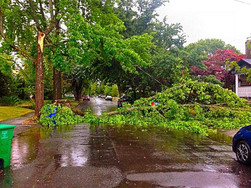 WILLIAM A. HENDERSON - This is the photo of the fallen tree limb blocking S.E. 20th, north of Bybee in Westmoreland, after the thunderstorm in the 6 p.m. hour of Thursday, June 27. The limb fell across utility wires on the way down.