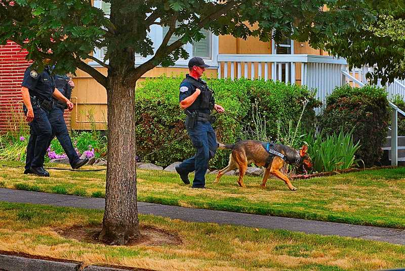 DAVID F. ASHTON - A police dog alerts that the burglary suspect has entered a fenced back yard; but, once inside, officers find the suspect has hopped the fence and gotten away.