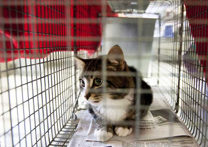 PMG FILE PHOTO - A recent onslaught of feral kittens in Dundee have several locals worried about endangerment to household pets, as the animals may be sick.