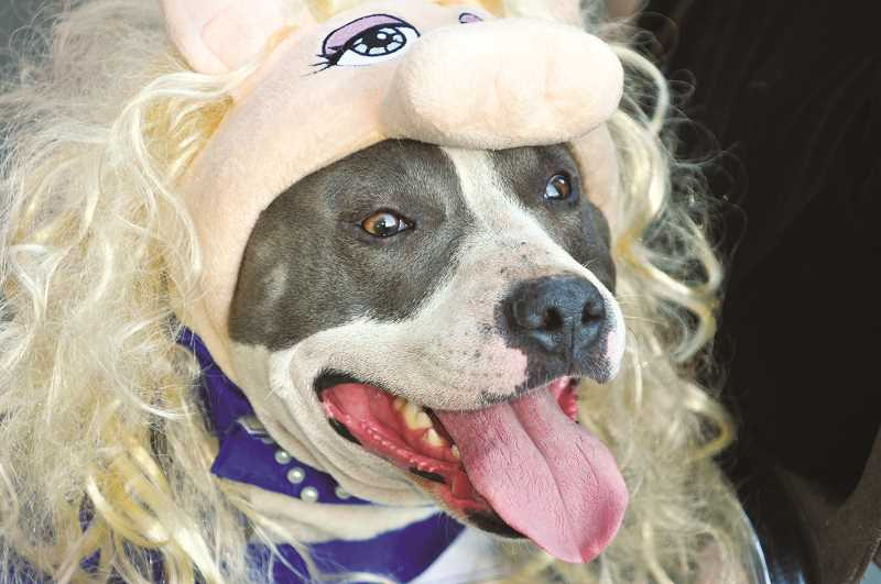 GRAPHIC PHOTO: GARY ALLEN - Lucy the blue-nosed pit bull, owned by Hadley Massey, was among the competitors in the 2019 Dog Costume Contest.